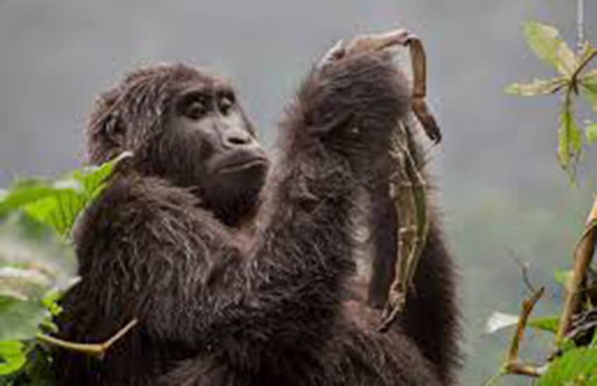 Winner of the Wildlife Photographer of the Year (Week 4)