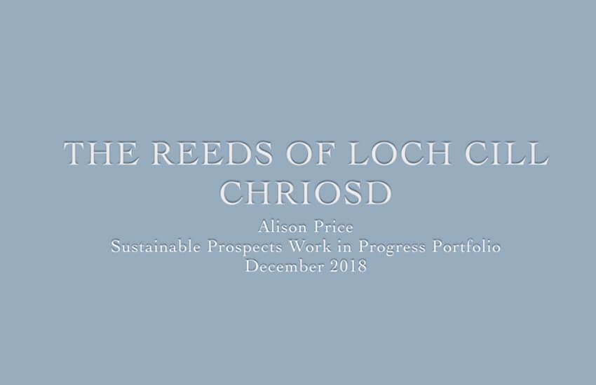 Progress on Work in Progress Portfolio – The Reeds of Loch Cill Chriosd (Week 9)