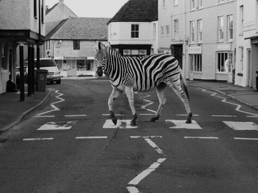 Twenty Zebra Crossings