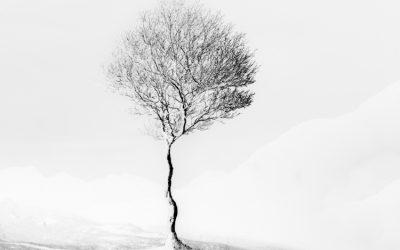 Giuseppe Penone – A Tree in the Wood