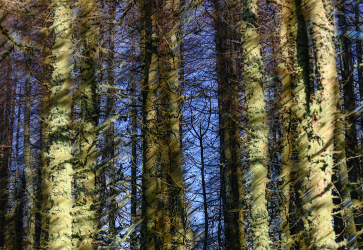Thought Piece 12 – Among Trees