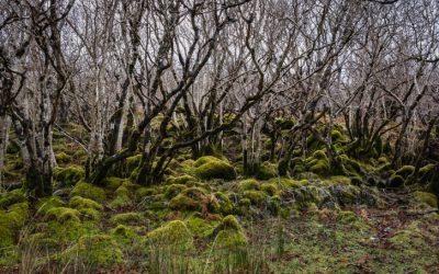 Wildwood by Roger Deakin